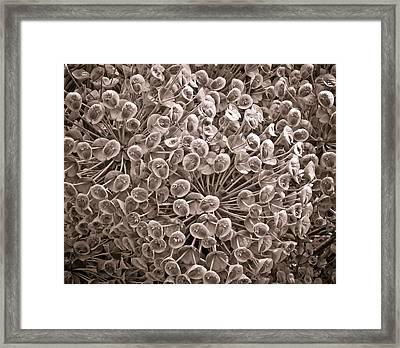 Sepia Nature Pattern Framed Print by Frank Tschakert