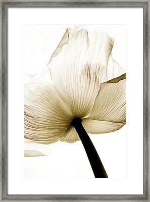 Sepia Poppy Flower Framed Print by Frank Tschakert