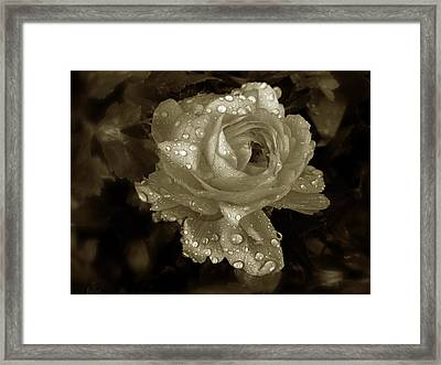 Sepia Rose Framed Print by Jessica Jenney