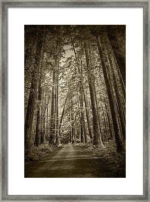 Sepia Tone Of A Rain Forest Dirt Road Framed Print by Randall Nyhof