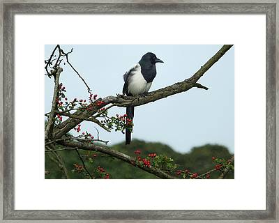 September Magie Framed Print by Philip Openshaw