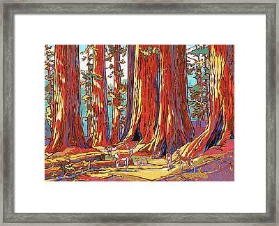 Sequoia Deer Framed Print by Nadi Spencer