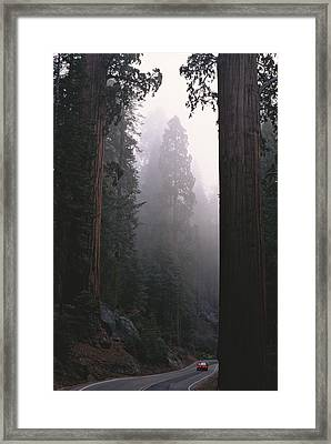 Sequoia Trees Dwarf A Car Traveling Framed Print by Carsten Peter