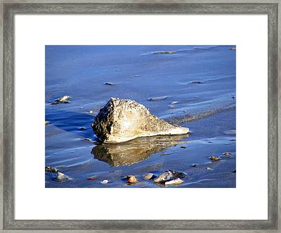 Serene Conch Shell At Isle Of Palms Framed Print by Elena Tudor