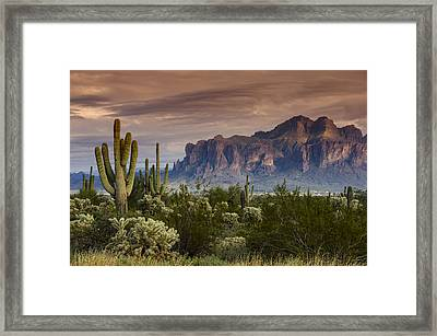 Serenity Of The Sonoran  Framed Print by Saija  Lehtonen