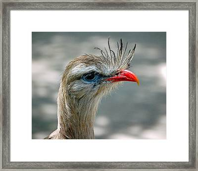 Seriema Bird Alert Framed Print by Donna Proctor