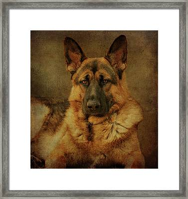 Serious Framed Print by Sandy Keeton