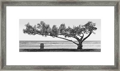 Shade Tree Bw Framed Print by Mike McGlothlen