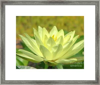 Shades Framed Print by Amanda Barcon