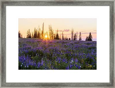 Shades Framed Print by Chad Dutson