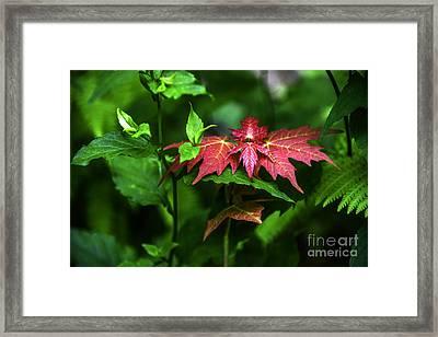 Shades Of Nature Framed Print by Amanda Sinco