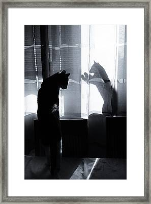 Shadow Cats Framed Print by Cambion Art