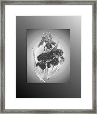 Shadow Iris II Framed Print by Jacquie King