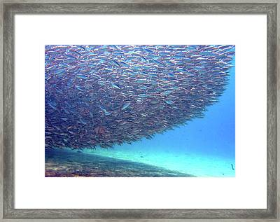 Shadow On Reef - Bait Ball Framed Print by Dr Peter M Forster