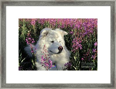Shadows Framed Print by Fiona Kennard