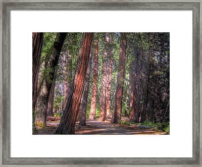 Shady Path Framed Print by Jane Linders