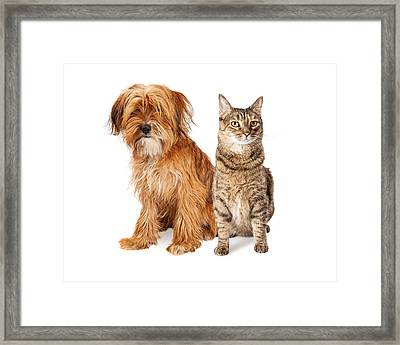 Shaggy Dog And Tabby Cat Sitting Together Framed Print by Susan Schmitz