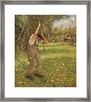 Shaking Down Cider Apples  Framed Print by Henry Herbert La Thangue