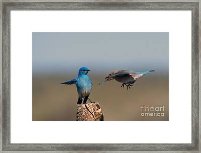 Share My Post Framed Print by Mike Dawson