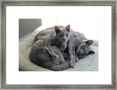 Sharing The Bed Framed Print by James Steele
