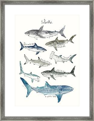 Sharks Framed Print by Amy Hamilton