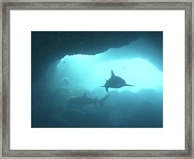 Sharks Circling In Cave Framed Print by Chris Stankis