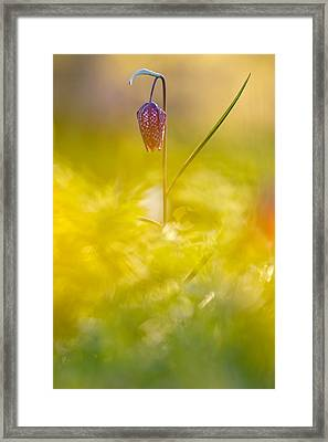 She Comes In Colours Framed Print by Roeselien Raimond