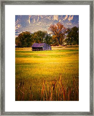 Shed In Sunlight Framed Print by Marilyn Hunt