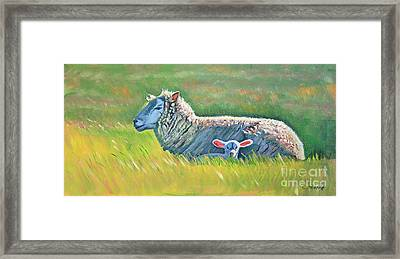 Sheep At Red Hill Farms Framed Print by Colleen Proppe