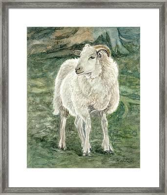 Sheep At The Farm Framed Print by Phyllis Tarlow