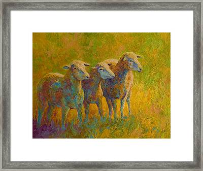 Sheep Trio Framed Print by Marion Rose