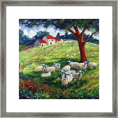 Sheeps In A Field Framed Print by Richard T Pranke