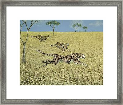 Sheer Speed Framed Print by Pat Scott