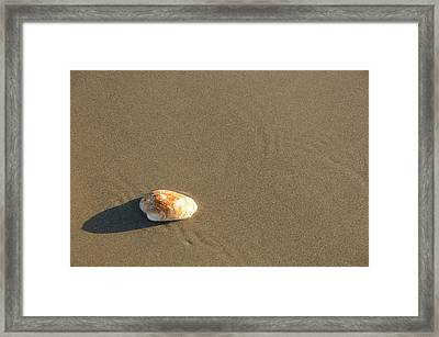 Shell And Waves Part 1 Framed Print by Alasdair Turner