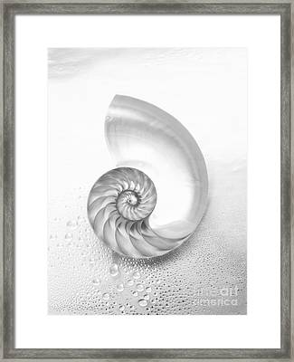 Shell Inside - Bw Framed Print by Kate Turning & Tom Gibson - Printscapes