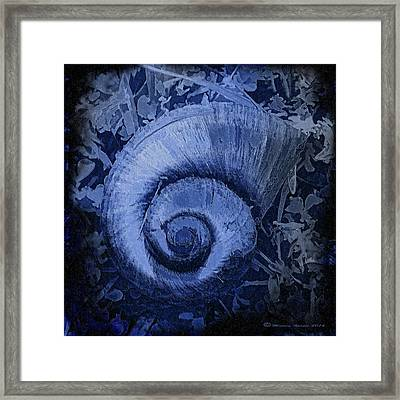 Shell Series 3 Framed Print by Marvin Spates
