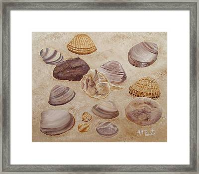 Shells And Stones Framed Print by Angeles M Pomata