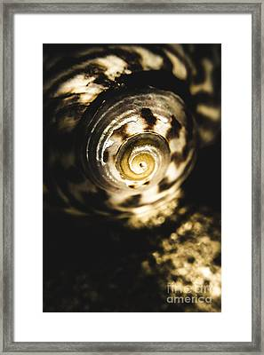Shells In Detail Framed Print by Jorgo Photography - Wall Art Gallery