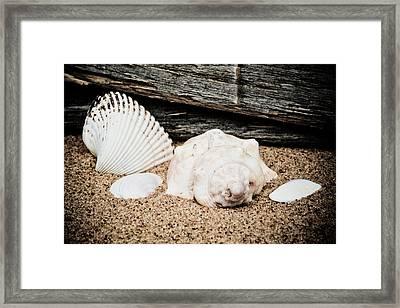Shells On The Beach Framed Print by David Hahn