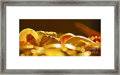 Shells Xvi Framed Print by Cassandra Buckley