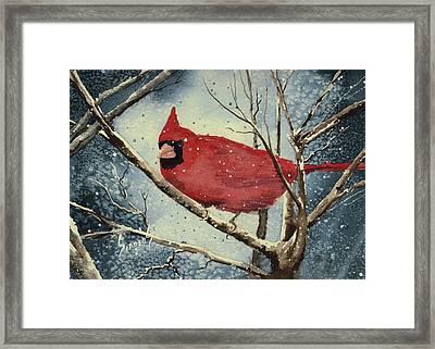 Shelly's Cardinal Framed Print by Sam Sidders