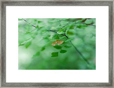 Sheltered Framed Print by Az Jackson