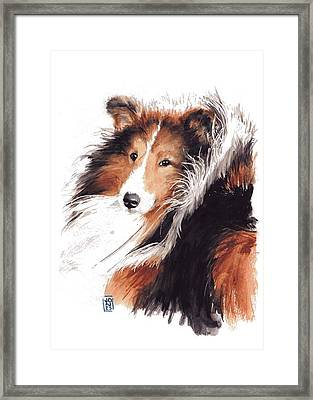 Sheltie Framed Print by Debra Jones