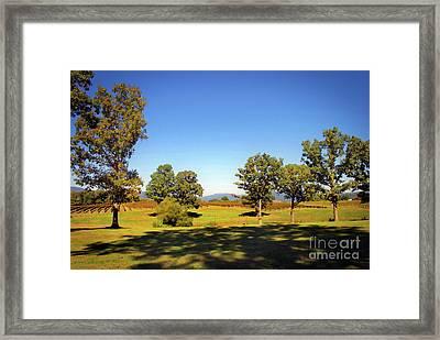 Shenandoah Vineyard Framed Print by Skip Willits