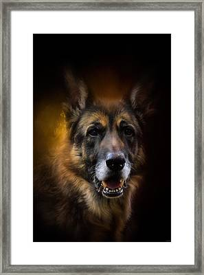 Shepherd Glow Framed Print by Jai Johnson