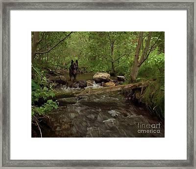 Shepherd In Stream Framed Print by Roland Stanke