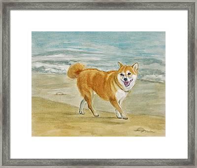 Shiba Inu Dog At The Beach Framed Print by Phyllis Tarlow
