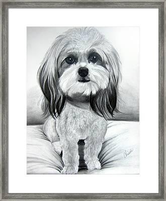 Shih Poo Graphite Framed Print by Chrissie Leander