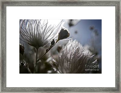 Shimmering Flower II Framed Print by Ray Laskowitz - Printscapes