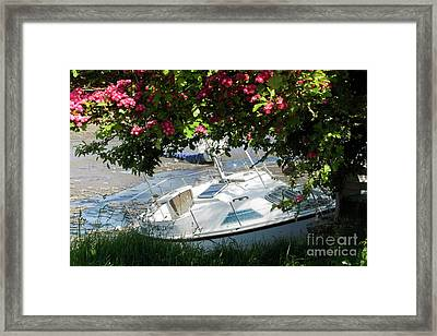 Shindilla Framed With Flowers Framed Print by Terri Waters